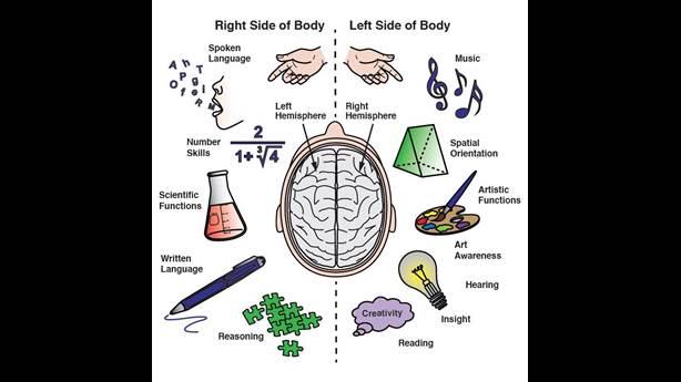 <p>Les fonctions des deux hémisphères du cerveau.</p> <p>&nbsp;</p>