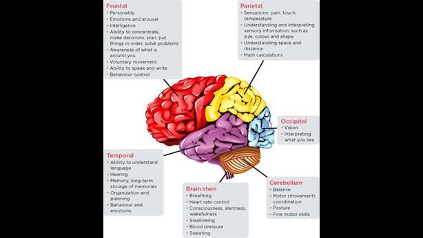 <p>Les lobes du cerveau et ce qu'ils contrôlent.</p> <p>&nbsp;</p>